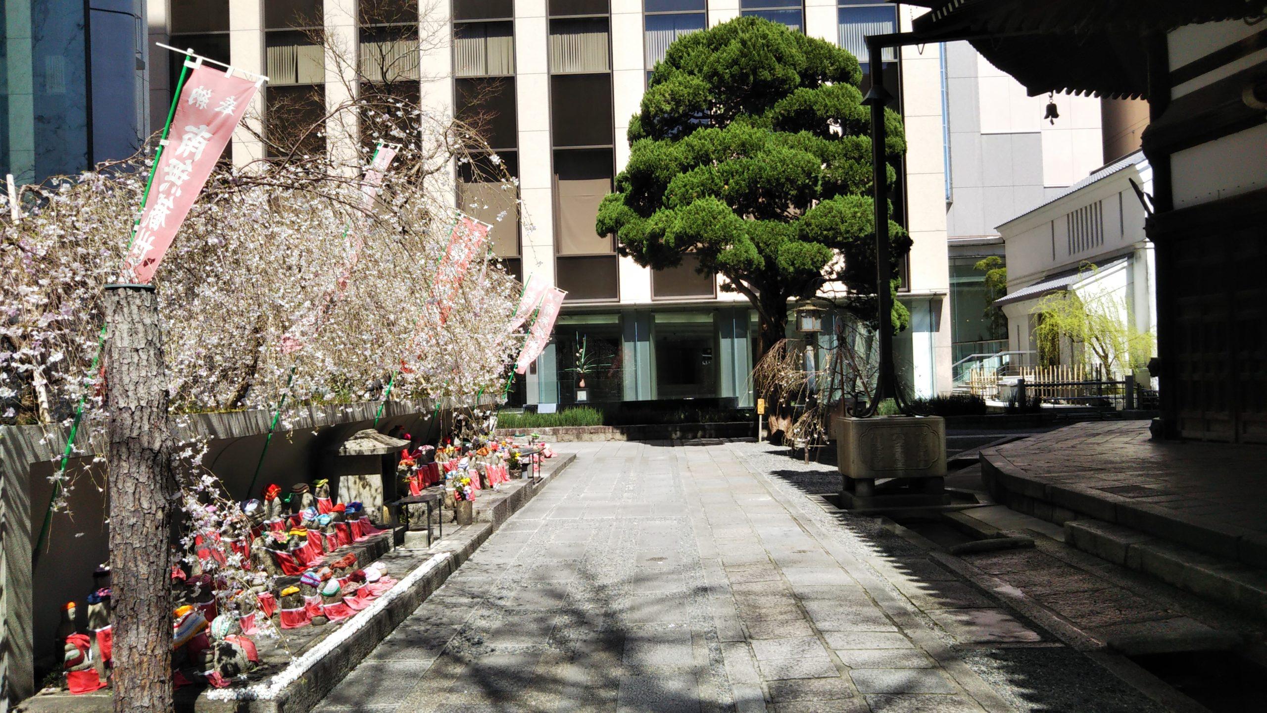 京都 六角堂 地蔵 桜