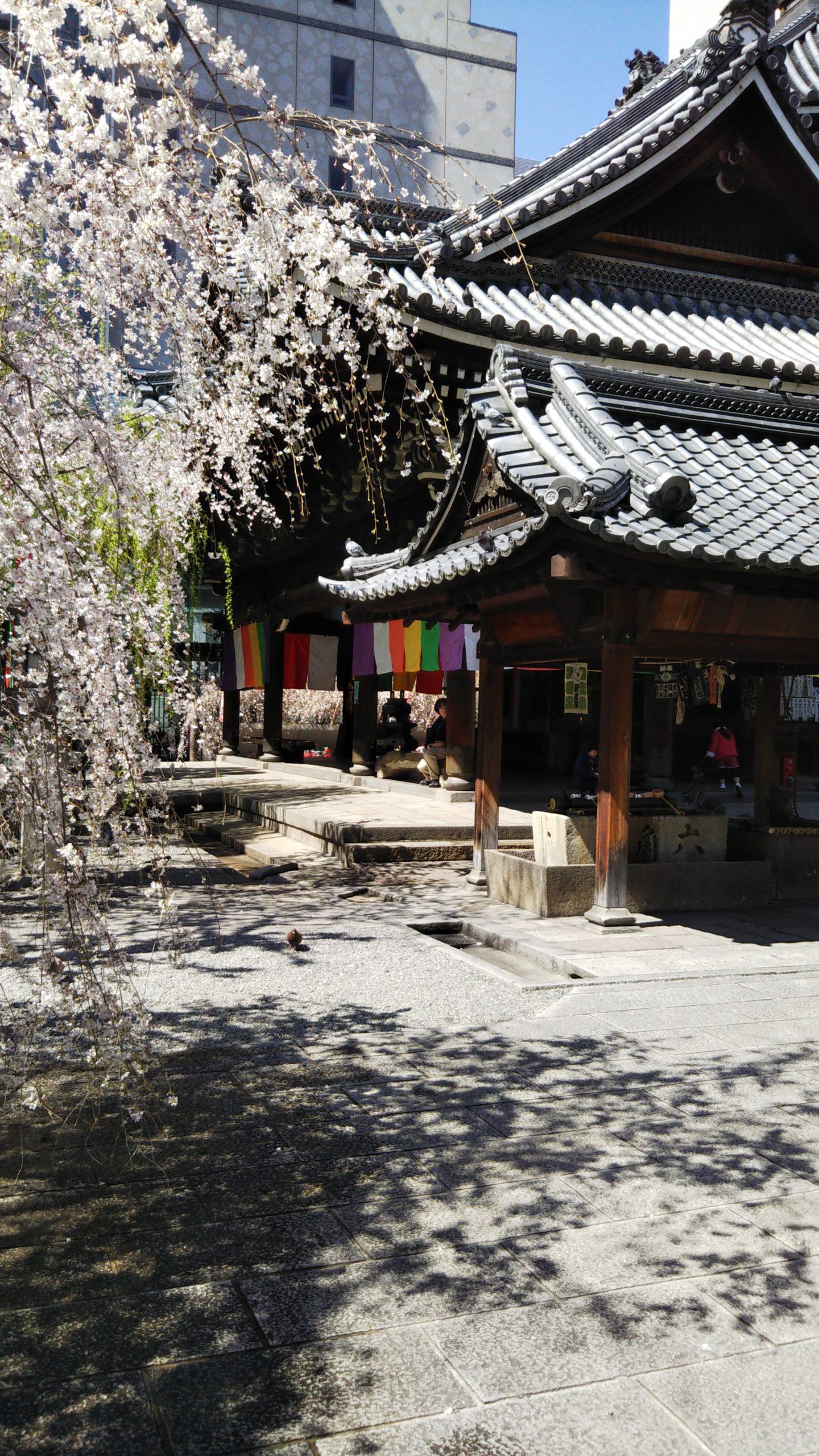 京都 六角堂 枝垂れ桜